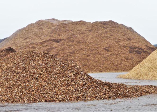 Beschikbaarheid van Nederlandse verse houtige biomassa in 2030 tot 2050