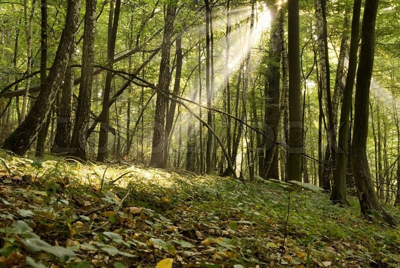 Biomassa en CO2