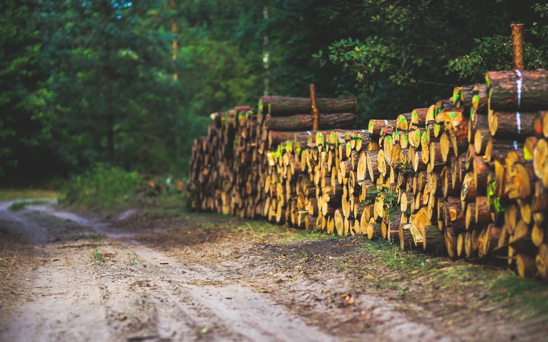 Optimale inzet biomassa, matchmaking vraag en aanbod op Biomassa-evenement Gelderland
