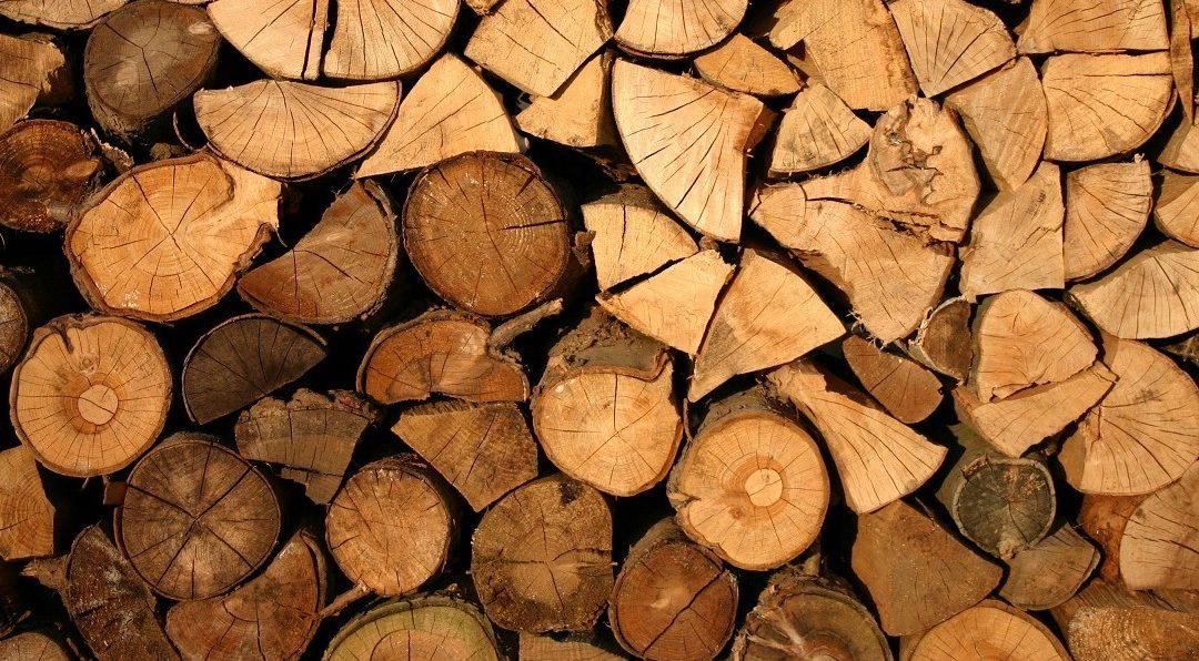 Bos- en houtbeheer