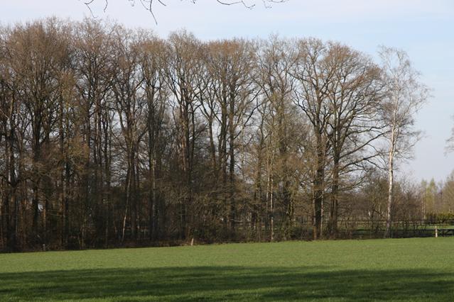 Ruim voldoende hout beschikbaar uit Europese bossen