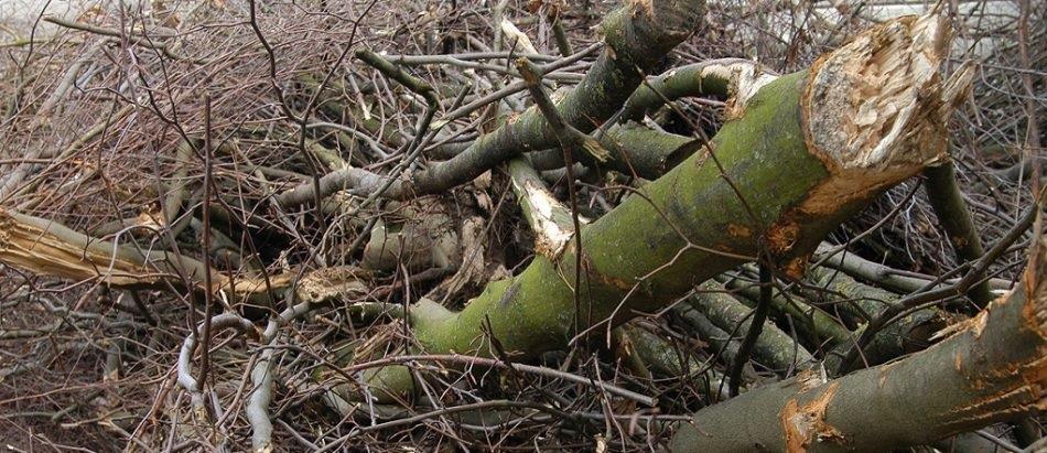 Houtwallen markeren niet alleen het Twentse coulisselandschap, ze zijn ook goed voor het milieu