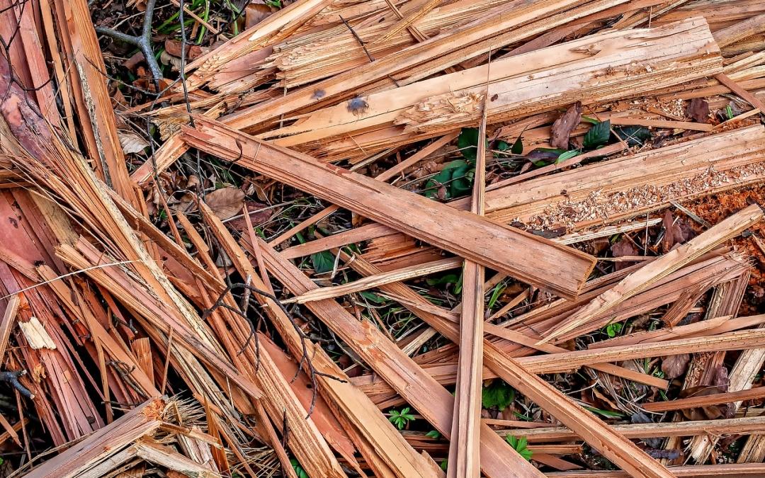 BEON-reactie op SER-rapport: Inzet biomassa juist belangrijk voor duurzame toekomst