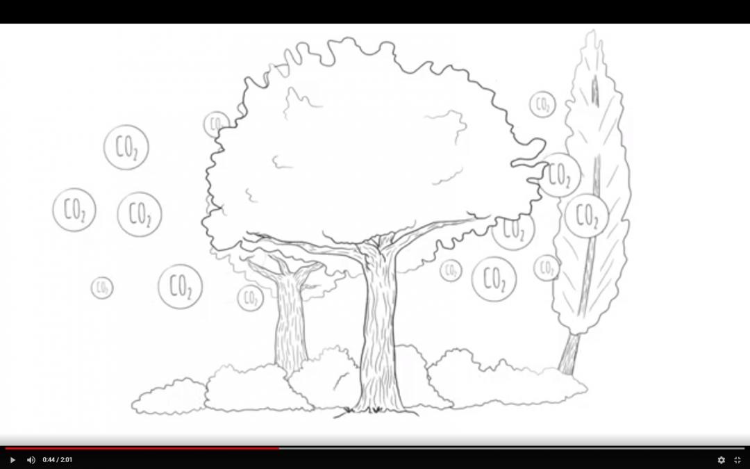 Animatiefilm over CO2 en biomassa