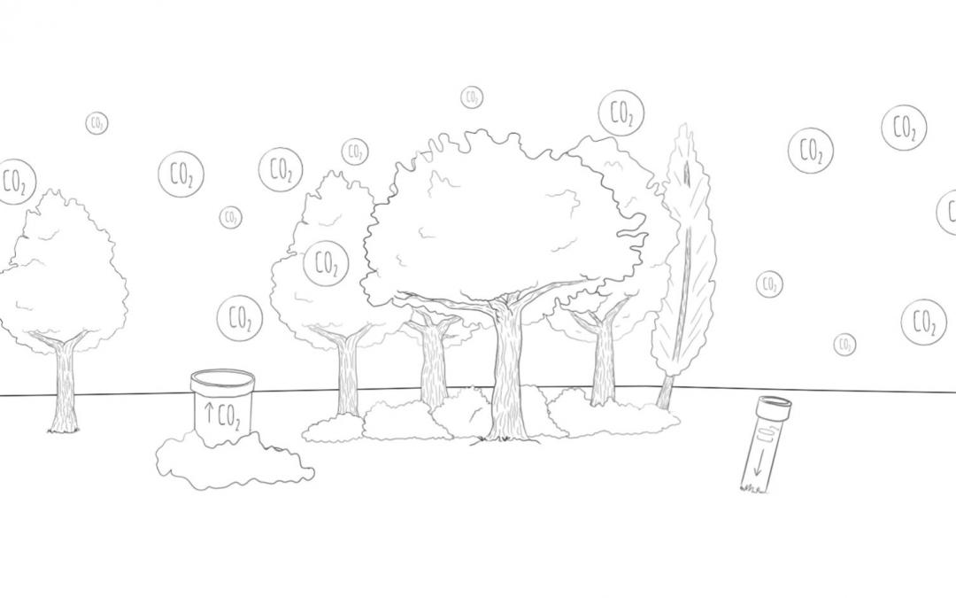 Prachtige verduidelijking over CO2 en biomassa